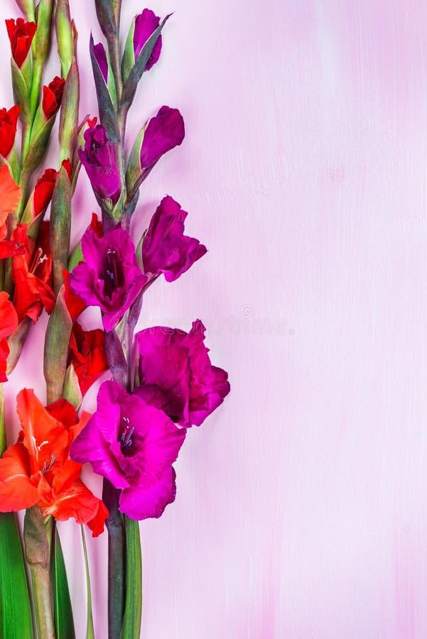 Mazzo di bei fiori di gladiolo fotografia stock