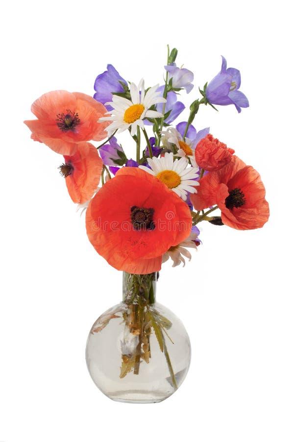 Mazzo di belle camomille grano e papaveri dei fiori isolati senza ombra fotografia stock