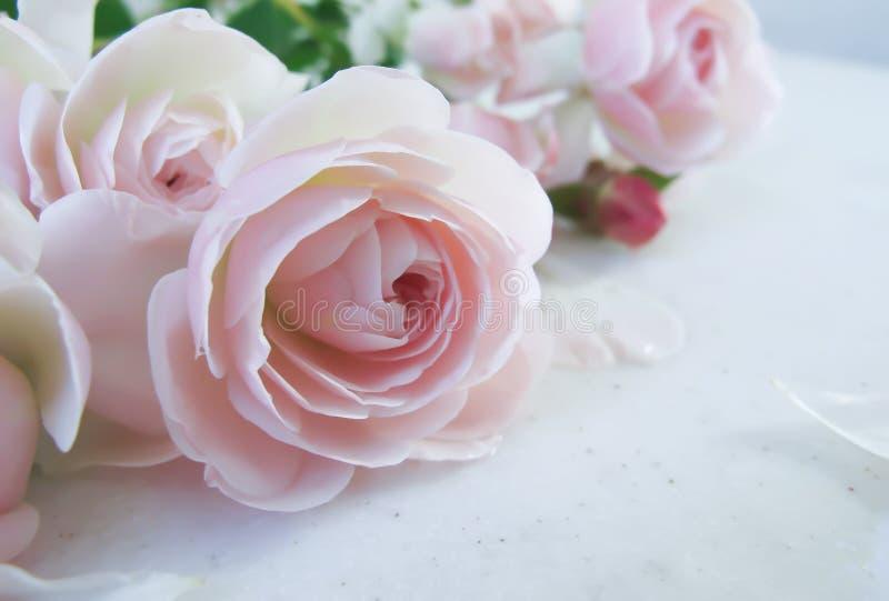 Mazzo di belle rose dentellare fotografia stock libera da diritti