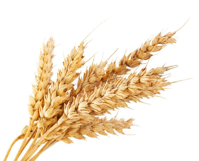Mazzo di cereale fotografia stock