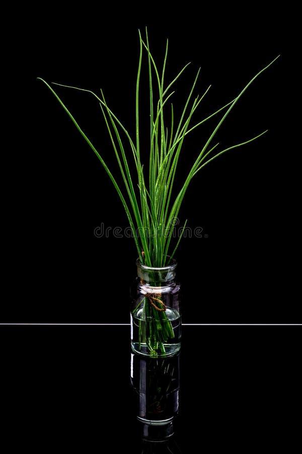 Mazzo di erba cipollina fresca immagini stock