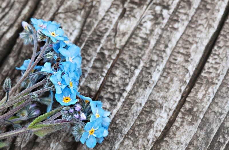 Mazzo di fiore blu di myosotis immagini stock