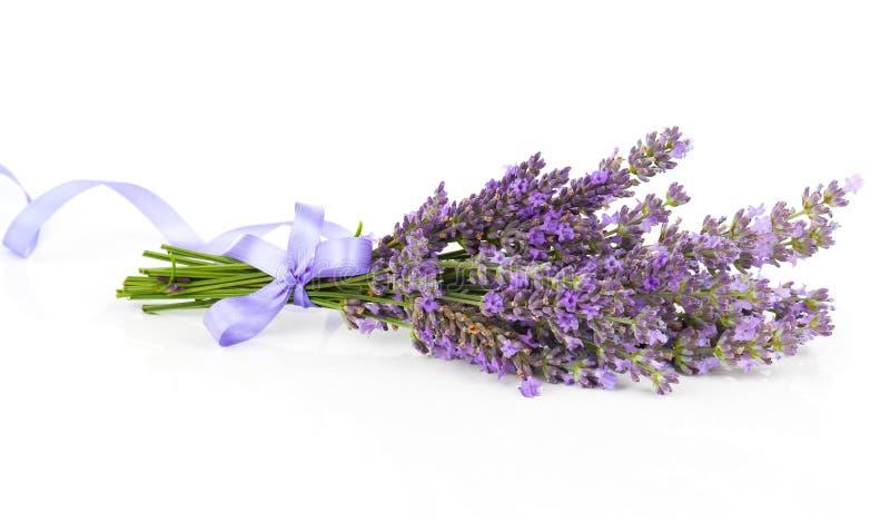 Mazzo di fiori della lavanda con il nastro del raso for Fiori di lavanda