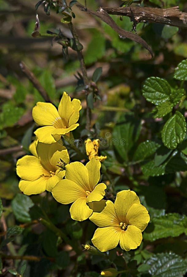 Mazzo di fiori gialli sopra nello sfondo naturale immagine stock libera da diritti