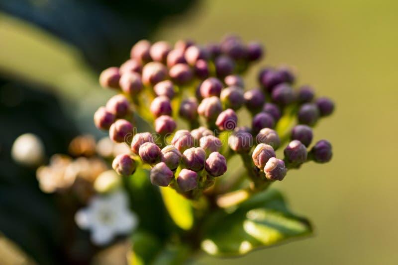 Mazzo di fiori lilla in natura fotografie stock