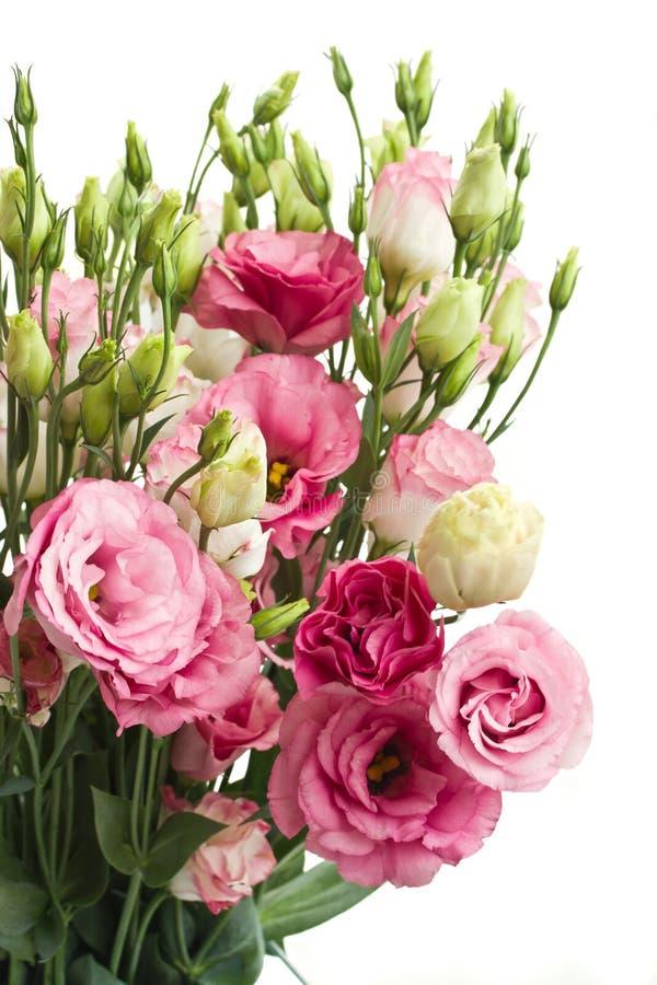 Mazzo di fiori rosa di eustoma fotografia stock libera da diritti