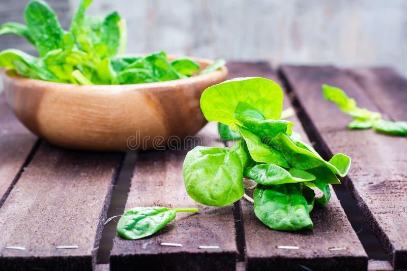 Mazzo di foglie fresche degli spinaci del bambino e di foglie degli spinaci in una ciotola immagini stock