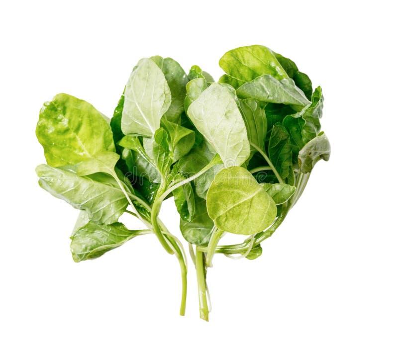 Mazzo di foglie verdi fresche degli spinaci isolate su fondo bianco Concetto sano di stile di vita Alimento di Vegeterian immagine stock libera da diritti