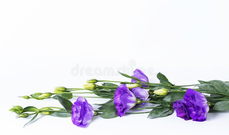 Mazzo di genziana di prateria porpora dei fiori di eustoma, lisianthus che si trova sul fondo bianco immagini stock libere da diritti