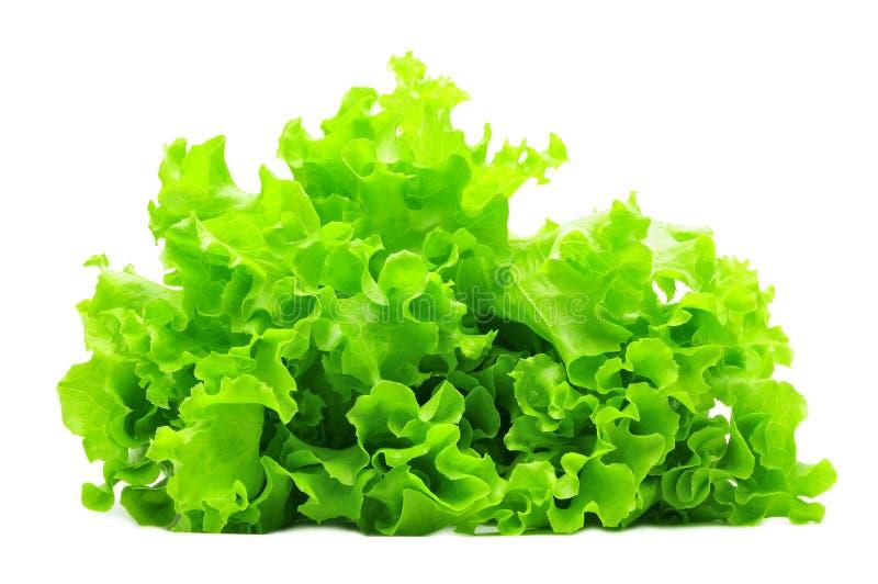 Mazzo di insalata verde isolato sopra bianco fotografia stock