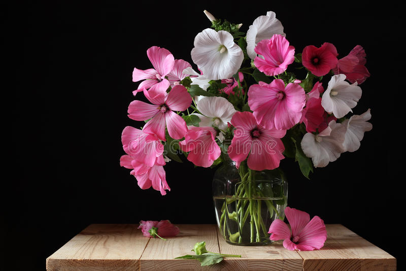Mazzo di Lavater rosa e bianco in un vaso di vetro fotografia stock