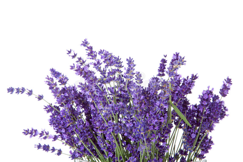Mazzo di lavende selezionato fotografia stock libera da diritti