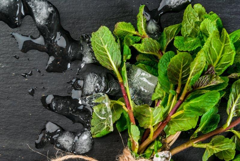Mazzo di menta fresca con ghiaccio fotografia stock libera da diritti