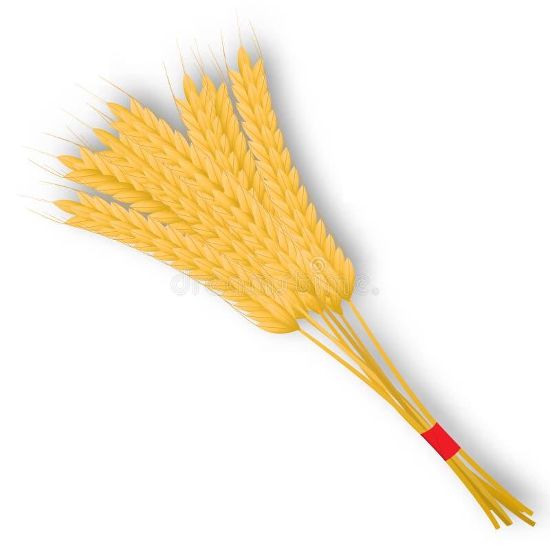 Mazzo di orecchie del grano con il nastro isolato su un fondo bianco illustrazione vettoriale