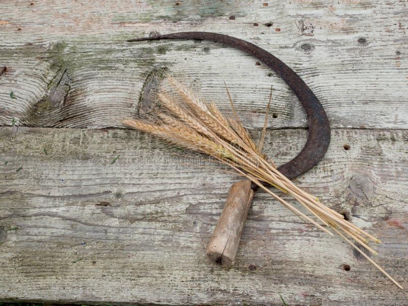 Mazzo di orecchie falciate del grano con la falce fatta a mano d'annata immagine stock