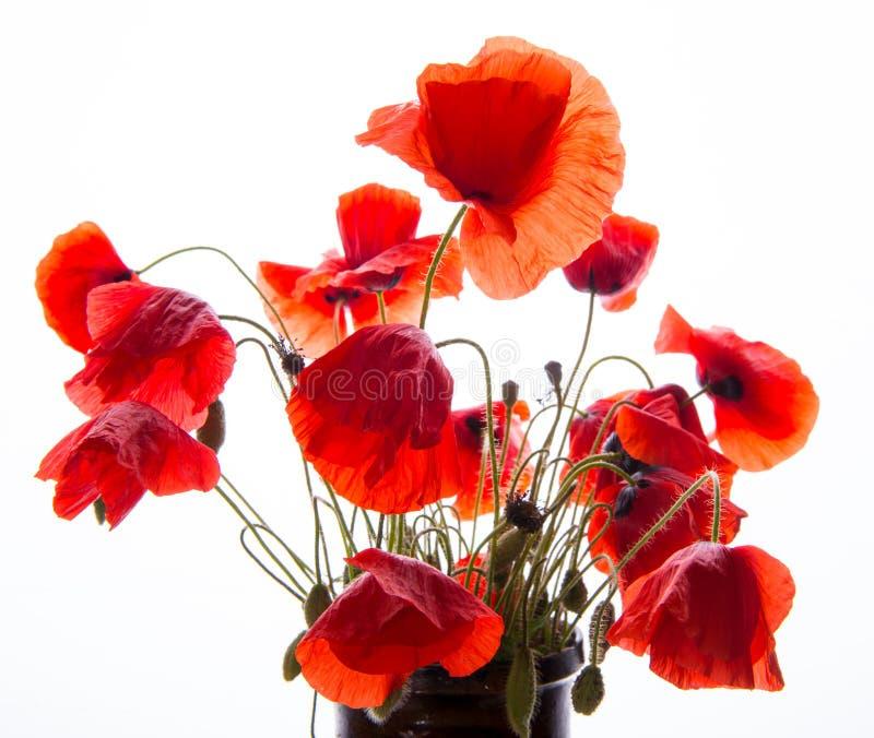 spesso Mazzo di papaveri immagine stock. Immagine di molla, fiore - 31273679 GZ39