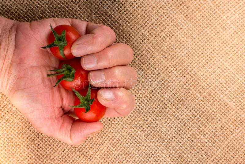 Mazzo di pomodori ciliegia maturi rossi a disposizione fotografia stock