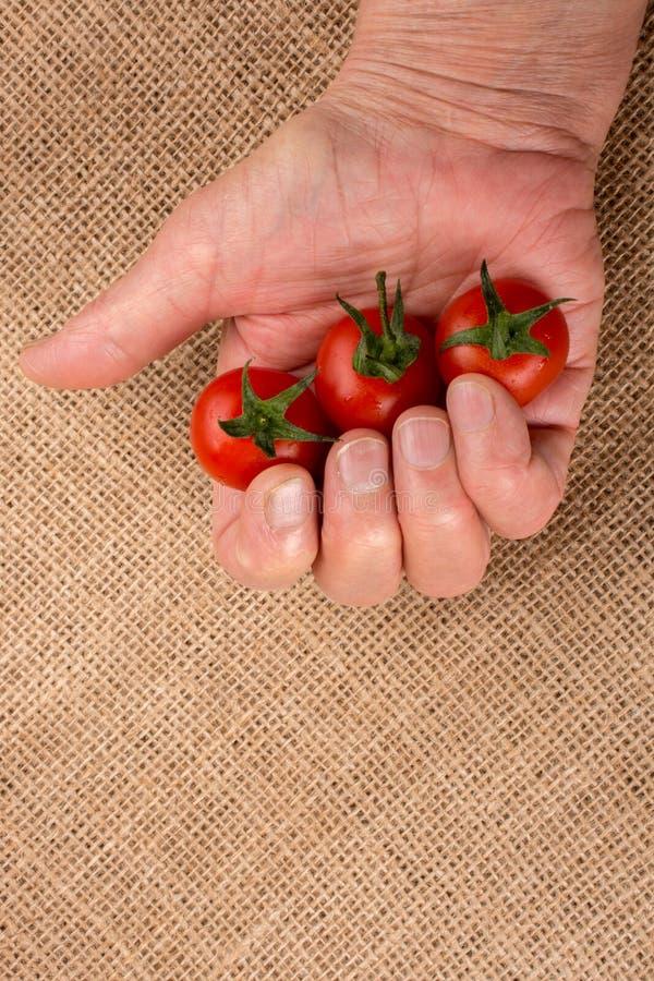 Mazzo di pomodori ciliegia maturi rossi a disposizione immagine stock libera da diritti
