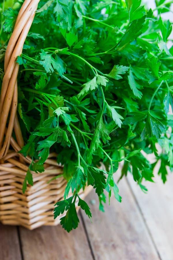 Mazzo di prezzemolo organico fresco dal giardino in un canestro di vimini, sulla tavola di legno della plancia, stile rustico immagini stock libere da diritti
