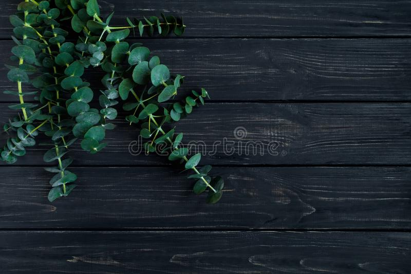 Mazzo di rami dell'eucalyptus su fondo nero Composizione minimalistic nella molla della natura, vista superiore, disposizione pia fotografie stock