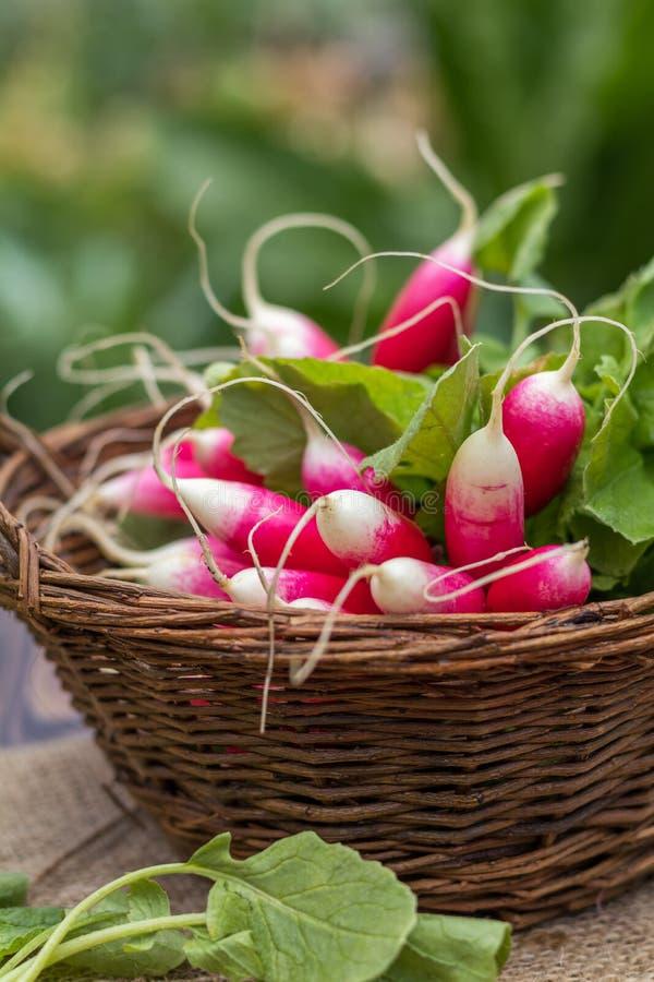 Mazzo di ravanelli freschi in un canestro di vimini all'aperto sulla tavola fotografie stock