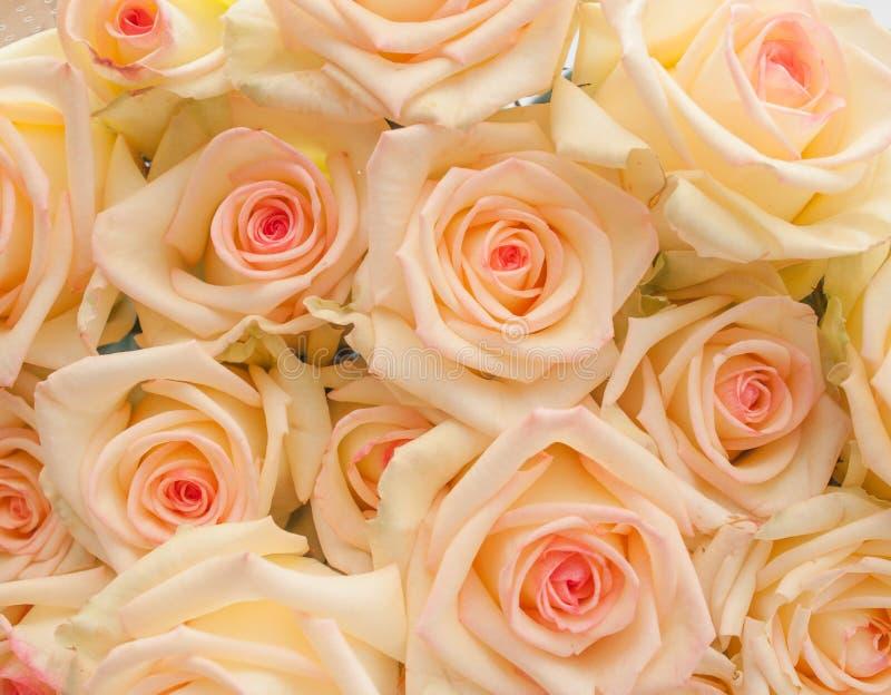 Mazzo di rose dell'avorio con il centro rosa fotografia stock libera da diritti