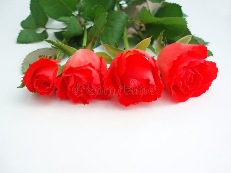 Mazzo di rose rosse fotografie stock libere da diritti