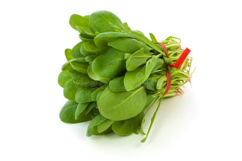 Mazzo di spinaci freschi del bambino immagini stock