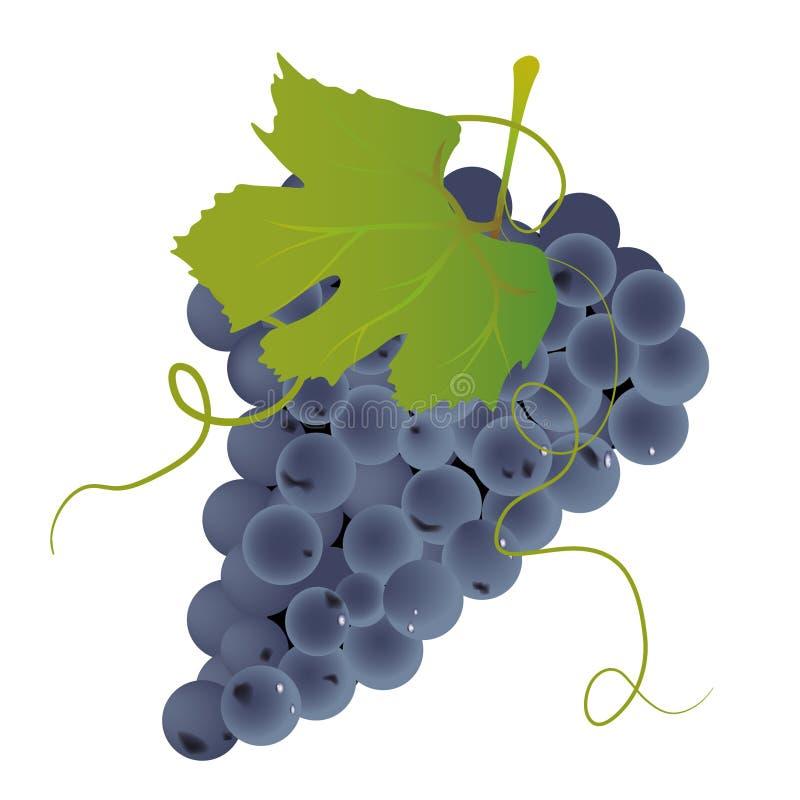 Mazzo di uva royalty illustrazione gratis