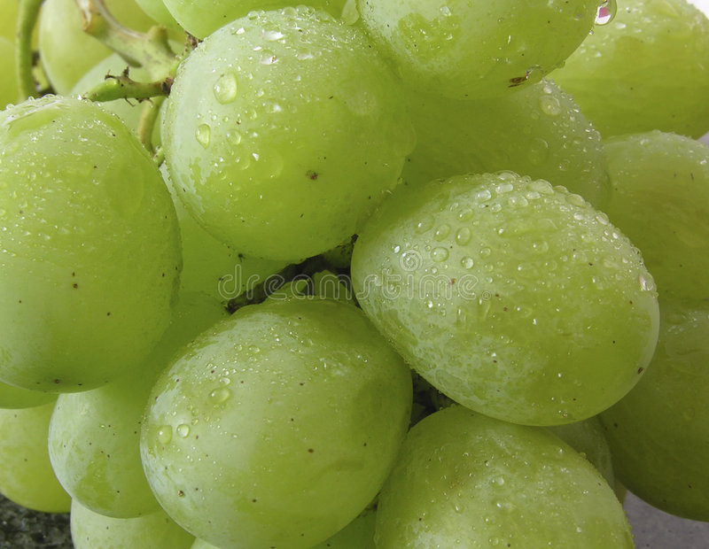 Download Mazzo di uva bagnata fotografia stock. Immagine di mangi - 206146