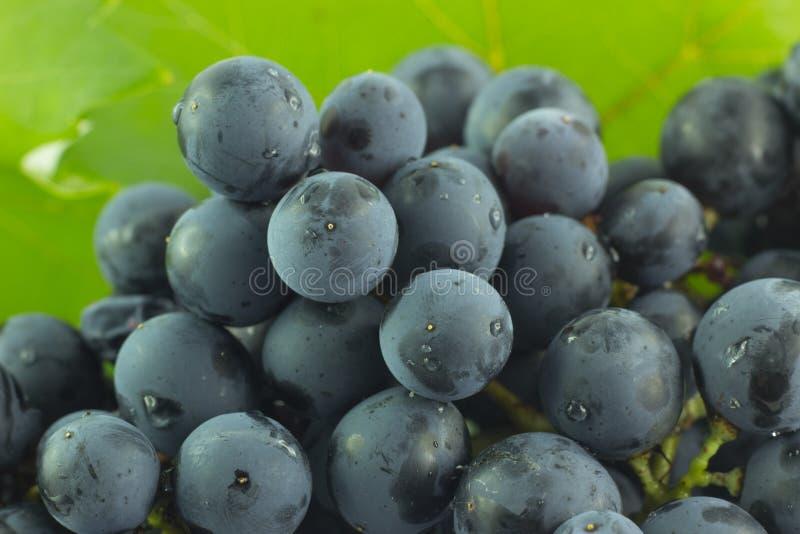 Mazzo di uva della fragola fotografia stock libera da diritti