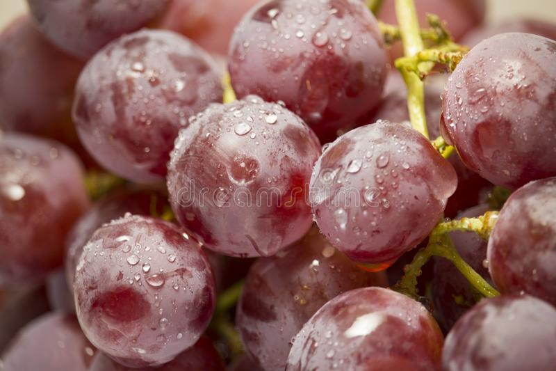 Mazzo di uva rossa coperta di gocce di acqua fotografie stock