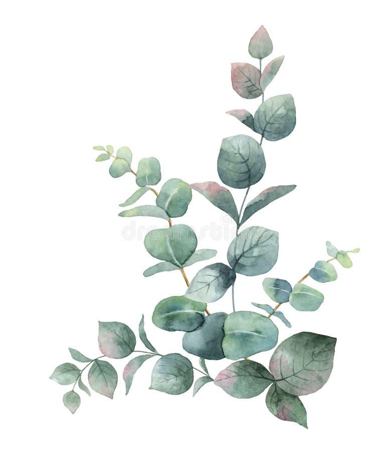 Mazzo di vettore dell'acquerello con le foglie ed i rami verdi dell'eucalyptus illustrazione vettoriale