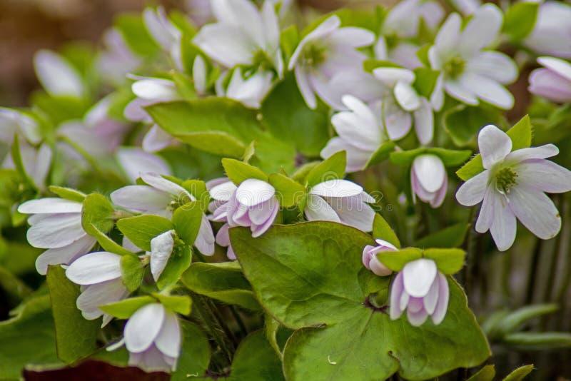 Mazzo di Wildflowers su Forest Floor In Springtime fotografia stock libera da diritti