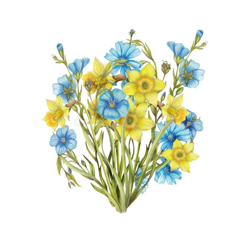 Mazzo disegnato a mano dei fiori del narciso, fiori del lino illustrazione di stock