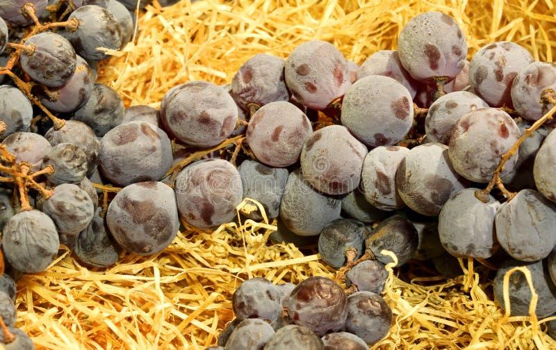 mazzo maturo di uva nera che riposa sulla paglia gialla fotografia stock libera da diritti