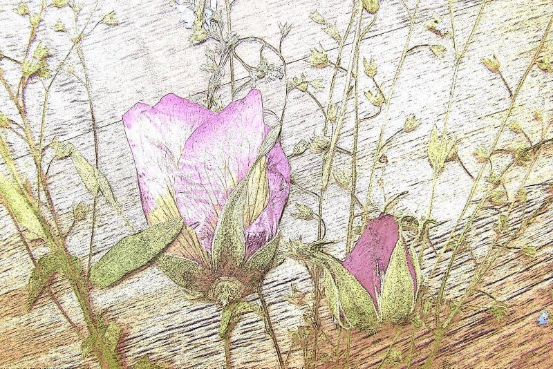 Mazzo pittoresco dei fiori secchi su un fondo di legno immagine stock libera da diritti