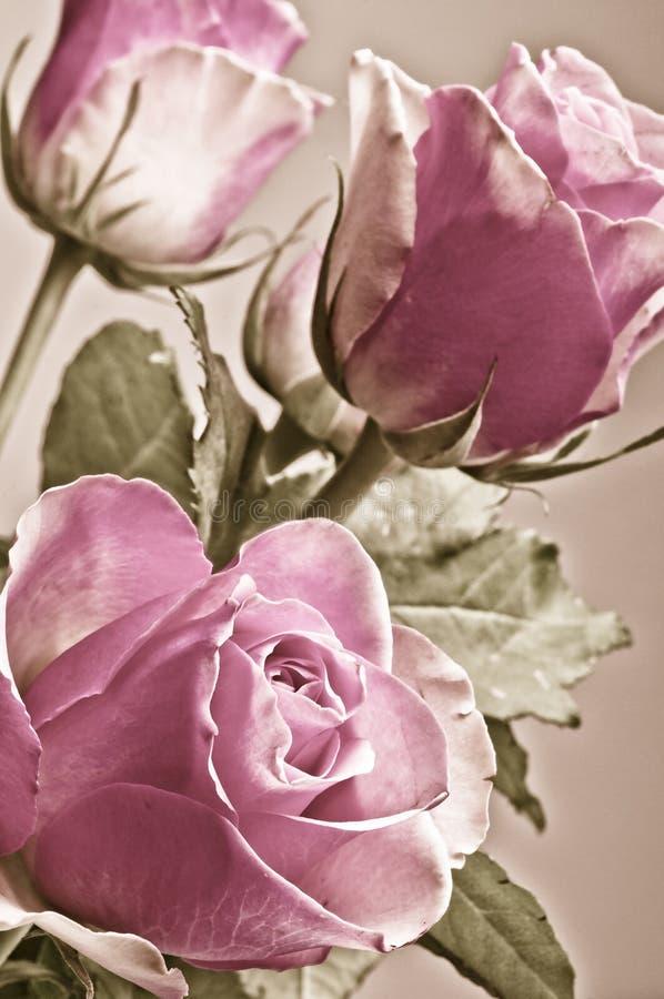 Mazzo romantico delle rose rosa nei colori d'annata fotografia stock libera da diritti