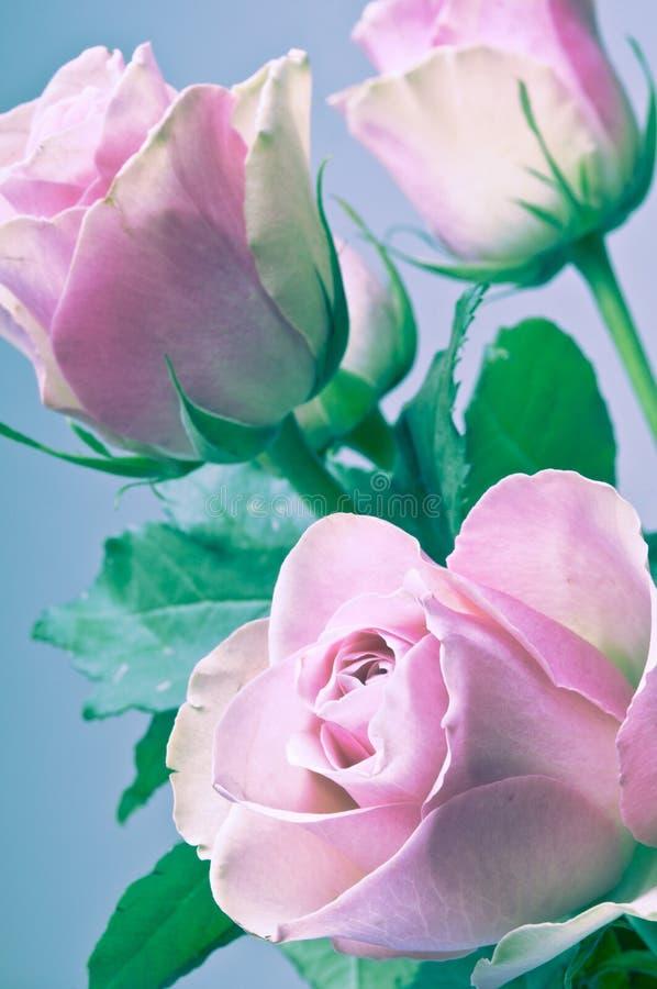 Mazzo romantico delle rose rosa nei colori d'annata fotografia stock