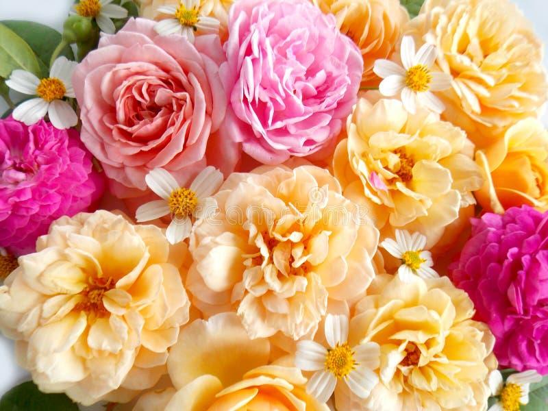 Mazzo rosa del fiore di bello inglese fotografie stock