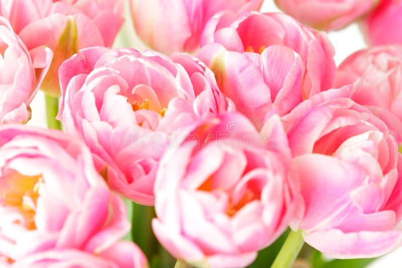 Mazzo rosa nostalgico del fiore del tulipano fotografie stock