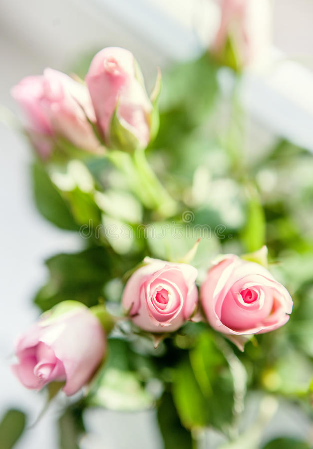 Mazzo rosa piccolo delle rose sul davanzale nella luce intensa fotografia stock libera da diritti