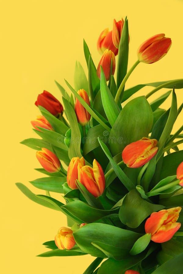 Mazzo rosso dei tulipani immagini stock