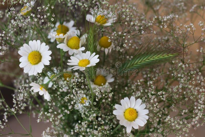 Mazzo selvaggio del primo piano delle erbe e dei fiori del prato del gypsophila bianco della camomilla fotografia stock