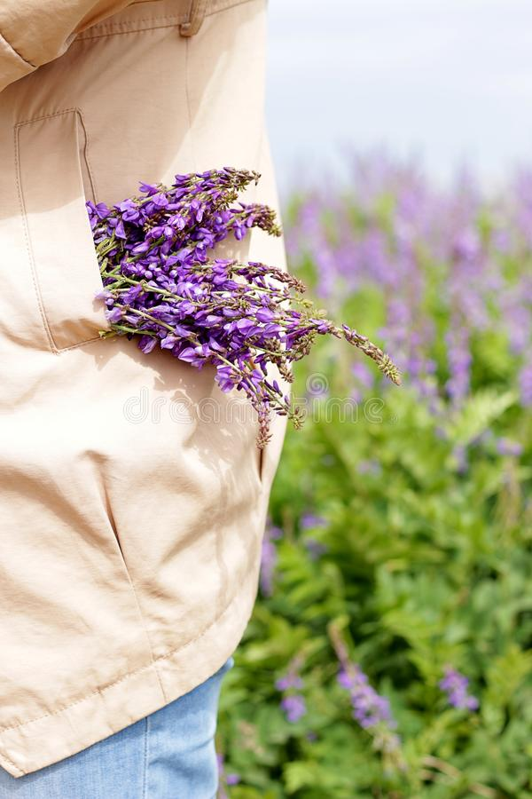 Mazzo in tasche un mazzo dei fiori viola del campo che danno una occhiata fuori alle tasche del cappotto delle loro donne un mazz fotografia stock libera da diritti