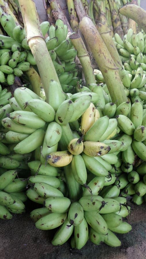 Mazzo verde della banana fotografia stock libera da diritti