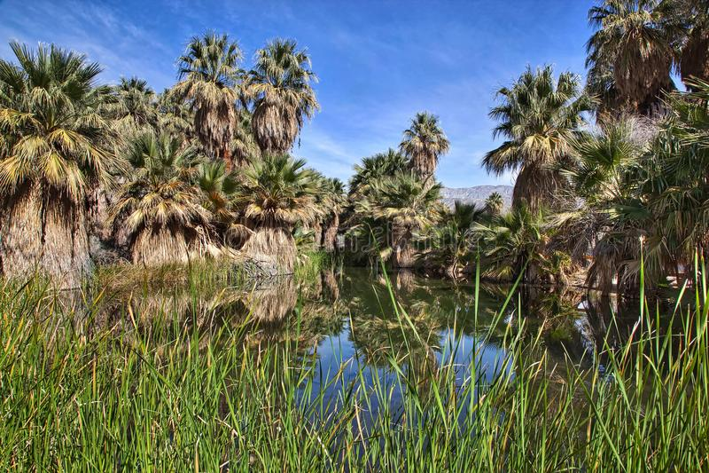 McCallum Pond with Palms stock image