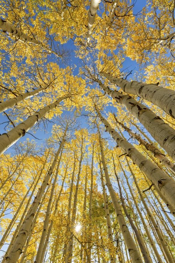 McClure Pass Aspen Grove Sunburst zdjęcia royalty free