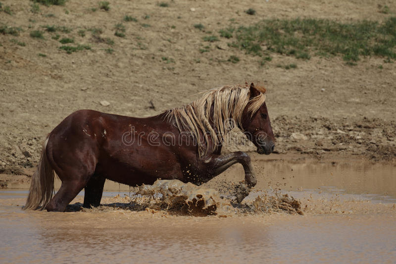 McCullough Szczyty dzicy Mustangi obraz royalty free