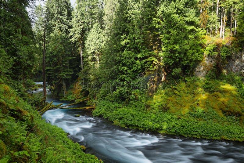 McKenzierivier Oregon stock fotografie